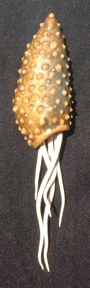 Pimple shell urchin scuplture